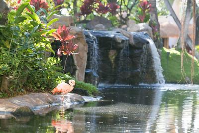 Maui-Hawaii-Honeymoon-561