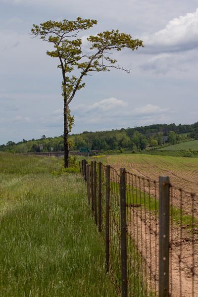 May 28th 2012 Tree