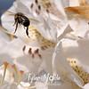 90  G Honeybee on White Rhodie