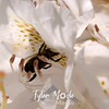 100  G Honeybee on White Rhodie