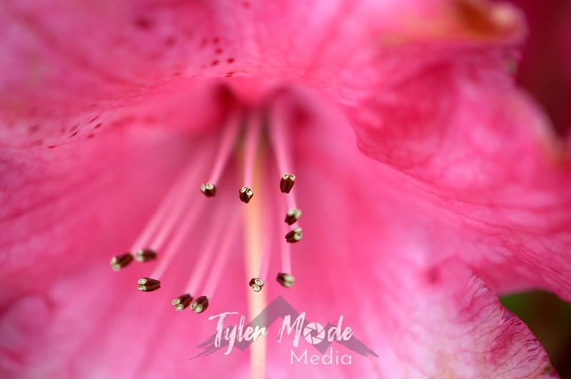 31  G Pink Rhodie Close