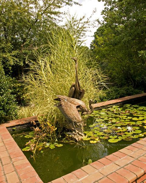 Herron Statue in pool