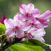 Rhododendron preserve