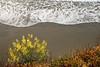Spring Flower Along the Mendocino Coast