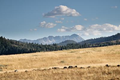 Cloud crowned Sawtooth Range