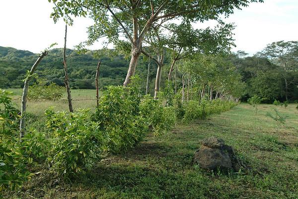 Costa Rica y el Mundo - Tomas de Naturaleza y Animales