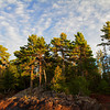 Majestic White Pines on the rocky shore of Lake Superior at Hunter's Point, Copper Harbor, Michigan.