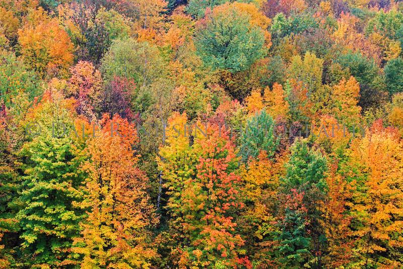 Fall Colors near the Bay Mills Indian Community, Bays Mills, Michigan