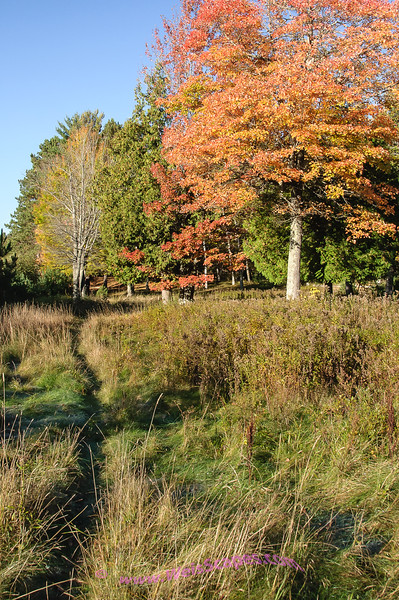 Fall colors on a morning hike at Clark Lake, Sylvania Wilderness area.