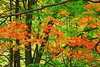 Michigan, Upper Peninsula, Fall Colors, Foliage Landscape 北部半岛 风景 秋色