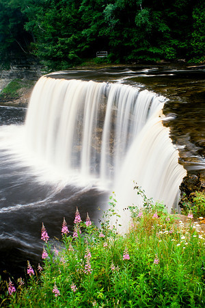 "Tahquamenon Falls and fireweed. Tahquamenon Falls is located about 10 minutes west of the small town of Paradise on M123.  *For information on purchasing prints and canvas gallery wraps, click the ""Purchasing"" tab at the top of the page. If viewing on your mobile device, scroll to the bottom of the page and click the ""Full Site"" tab to view as if you were on your home PC and then go to the ""Purchase"" tab to for purchasing info. In mobile mode, you will not see the standard navigation bar with the ""Purchase"" tab."