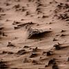 Sand sculptures on Lake Michigan
