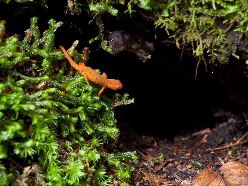 An intrepid explorer goes spelunking on the forest floor.  Look out for snakes little dude!