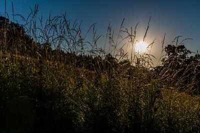 Sunset through the grass - Arley