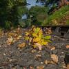 Fallen leaves on the SVR