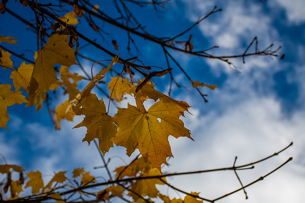 A sign of Autumn