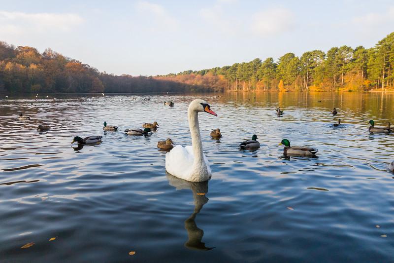 Birds on Blackroot Lake