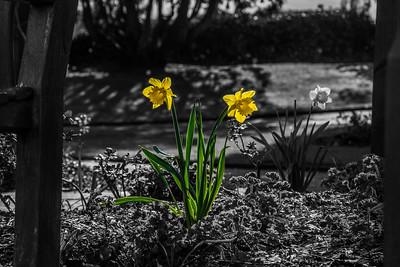 Spring breaking through - Bridgnorth Castle Gardens