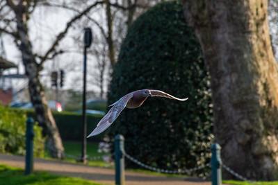 Springtime in Victoria Park, Stafford