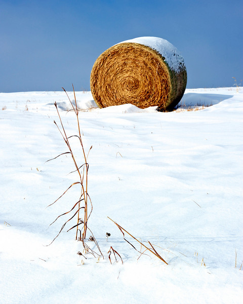 Lonely weed and bale