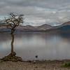 Milarrochy Bay - Loch Lomand - Stirlingshire, Scotland (April 2018)