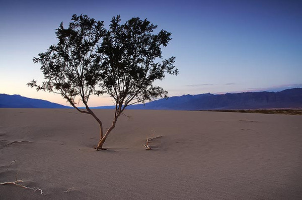 Barren - Death Valley