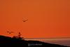 Gulls in the sunrise
