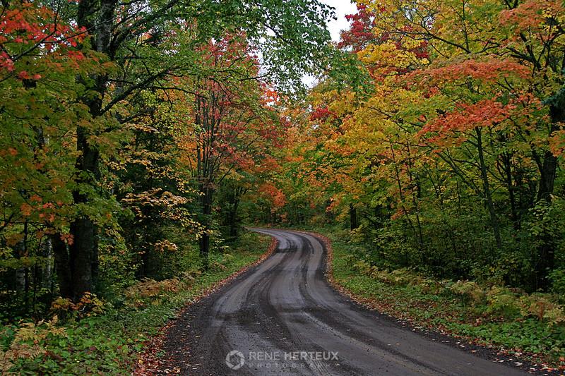 Fall colors along Honeymoon Trail