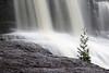 Gooseberry falls with cedar tree