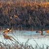 Four Ducks...