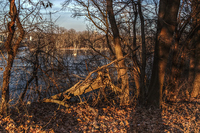 The afternoon sun is low in the sky on the banks of the Rock River in Mid December. The snow is all melted temporarily. It'll be back to stay for a while in a few weeks.  Janesville, Rock County, Wisconsin (USA)
