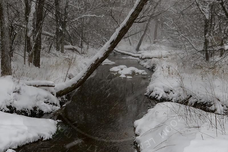 Winter on Spring Creek