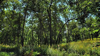 Festge County Park