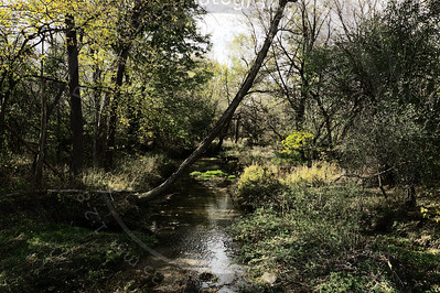 Autumn on Spring Creek