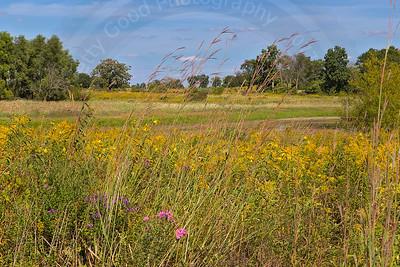 Late Summer Prairie