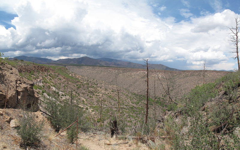 2011-07-31 (Sunday): lower Guaje Canyon as seen from the saddle. Looks like it escaped the fire.
