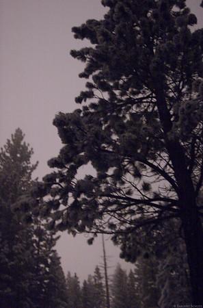 Lake Tahoe 2:00 A.M. Snowfall