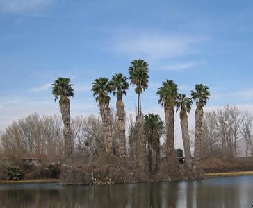 Island--Rancho Jurupa Park, Rubidoux. 07 Feb 2007