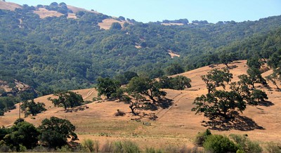 Pacheco Pass, Ca. 2 Jul 2008.