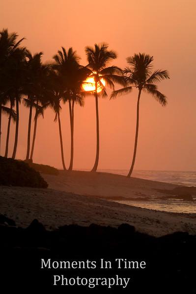 Sunset with palms V