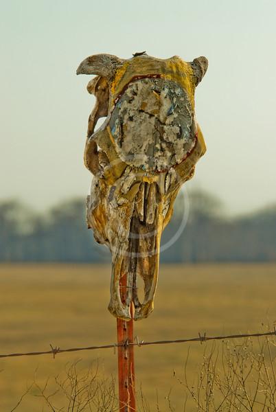 Painted skull on fence post