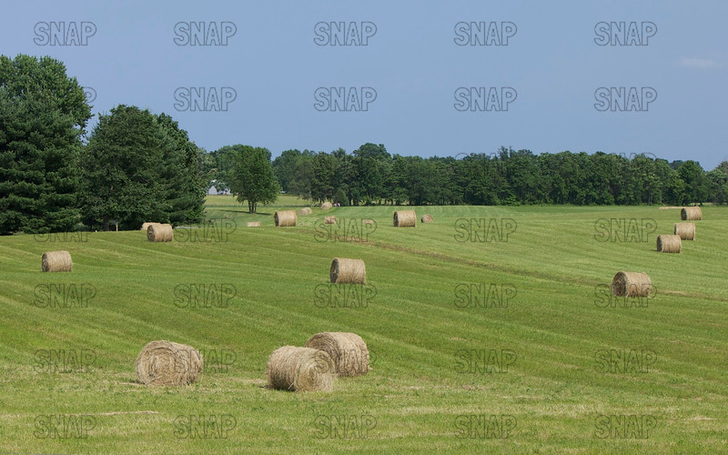 Round hay bales in rural Indiana.