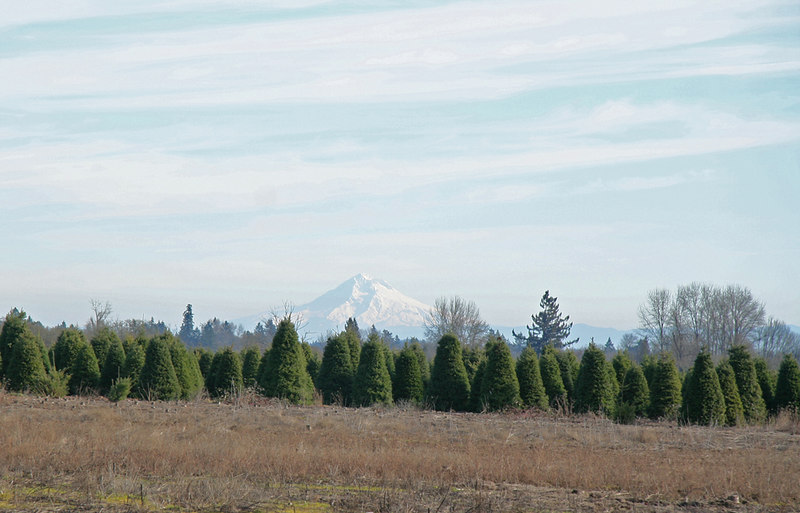 Mount Hood in the distance