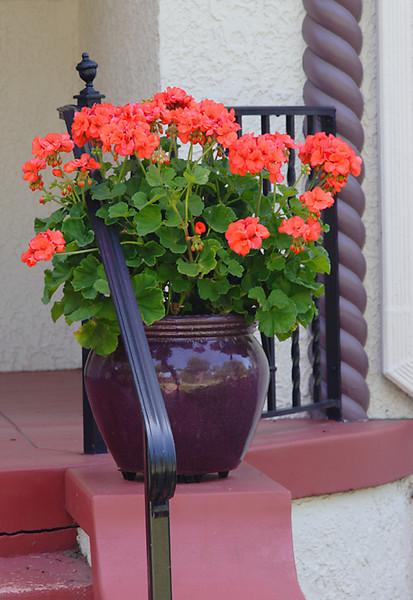 (IMG-1049)  Outdoor Floral 1 - Colorado Springs