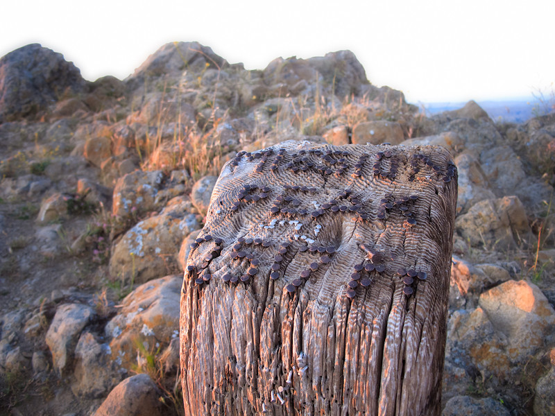 "Today I came across a wooden post where someone used nails to inscribe ""Mission Peak 2517 FT"" at the summit. I haven't noticed it before, so I think it was done fairly recently."