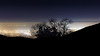 A silhouette of trees against the East Bay.