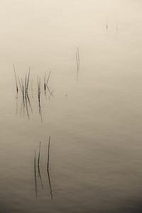 Mission Peak Kenna Pond