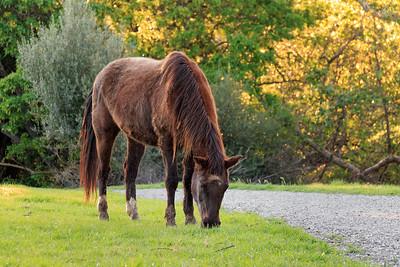 Mission Peak Horse