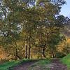 Grove Trail