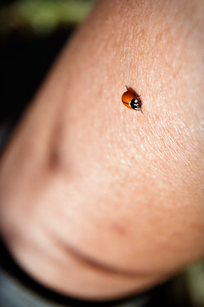 """Miss Ladybug lands on my leg. Andrew says my leg is """"all wrinkly""""!"""